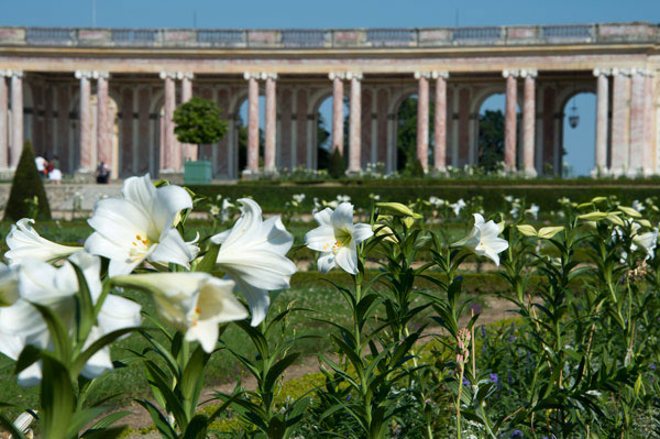 Exhibition: Flowers from royal collections at Château de Versailles