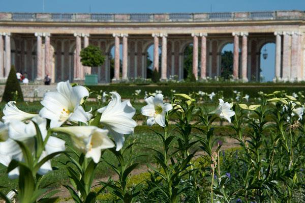 Exposition : Fleurs des collections royales au Château de Versailles
