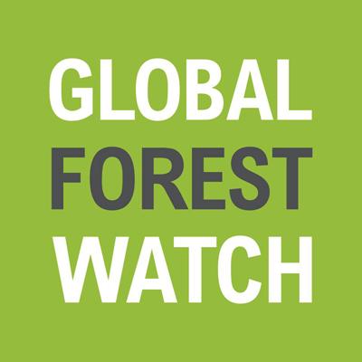 Google lance un observatoire mondial contre la déforestation