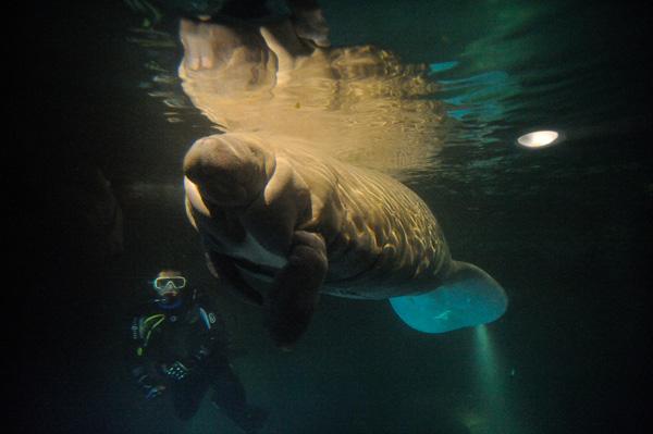 lamentin-zoo-de-vincennes-F-G-Grandin-MNHN-green-hotels-paris