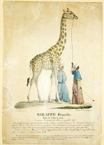 Exposition : Les Animaux célèbres de la Ménagerie du Jardin des Plantes