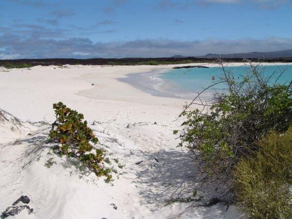 Galápagos : Interdiction de ramener des souvenirs biologiques ou géologiques
