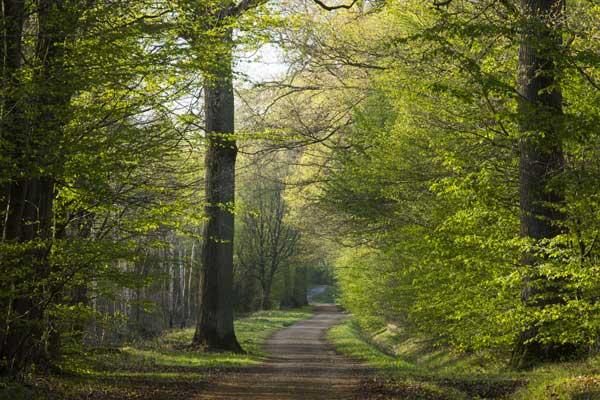 Pan : l'application pour découvrir les forêts d'Ile-de-France
