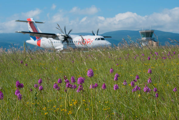 Thanks to Hop! Biodiversity: airports prove to be nature reserves