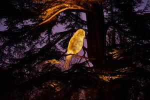 oiseau-illumine-jardin-d-acclimatation-photo-maxime-vigato-green-hotels-paris-eiffel-trocadero-gavarni