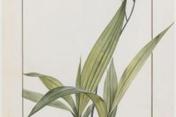 Exposition : Orchidées sur vélins