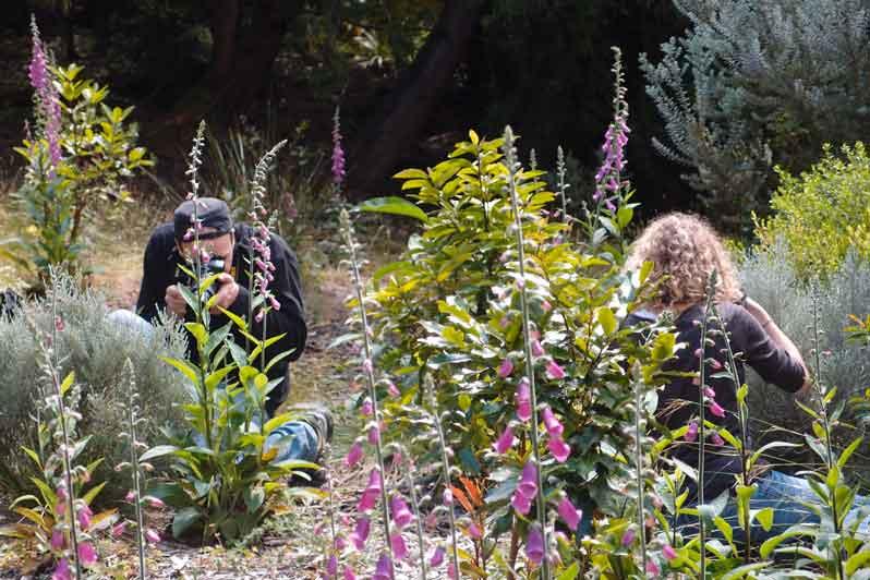 PlantNet : l'application dédiée à la botanique