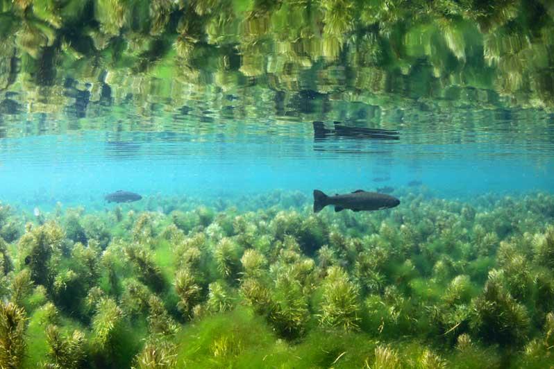 Exposition : La Seine sous la surface