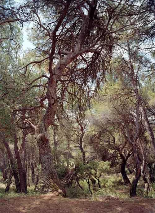 Exposition : Simone Nieweg, Dans les bois