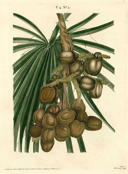 Exposition : Aventures botaniques en Orient