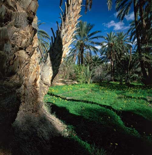 oasis-5-photo-jean-baptiste-leroux-exposition-jardins-d-ailleurs-galerie-jardins-en-art-green-hotels-paris-eiffel-trocadero-gavarni