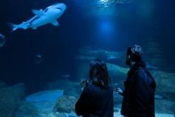 L'Aquarium de Paris ouvre ses portes en nocturne !