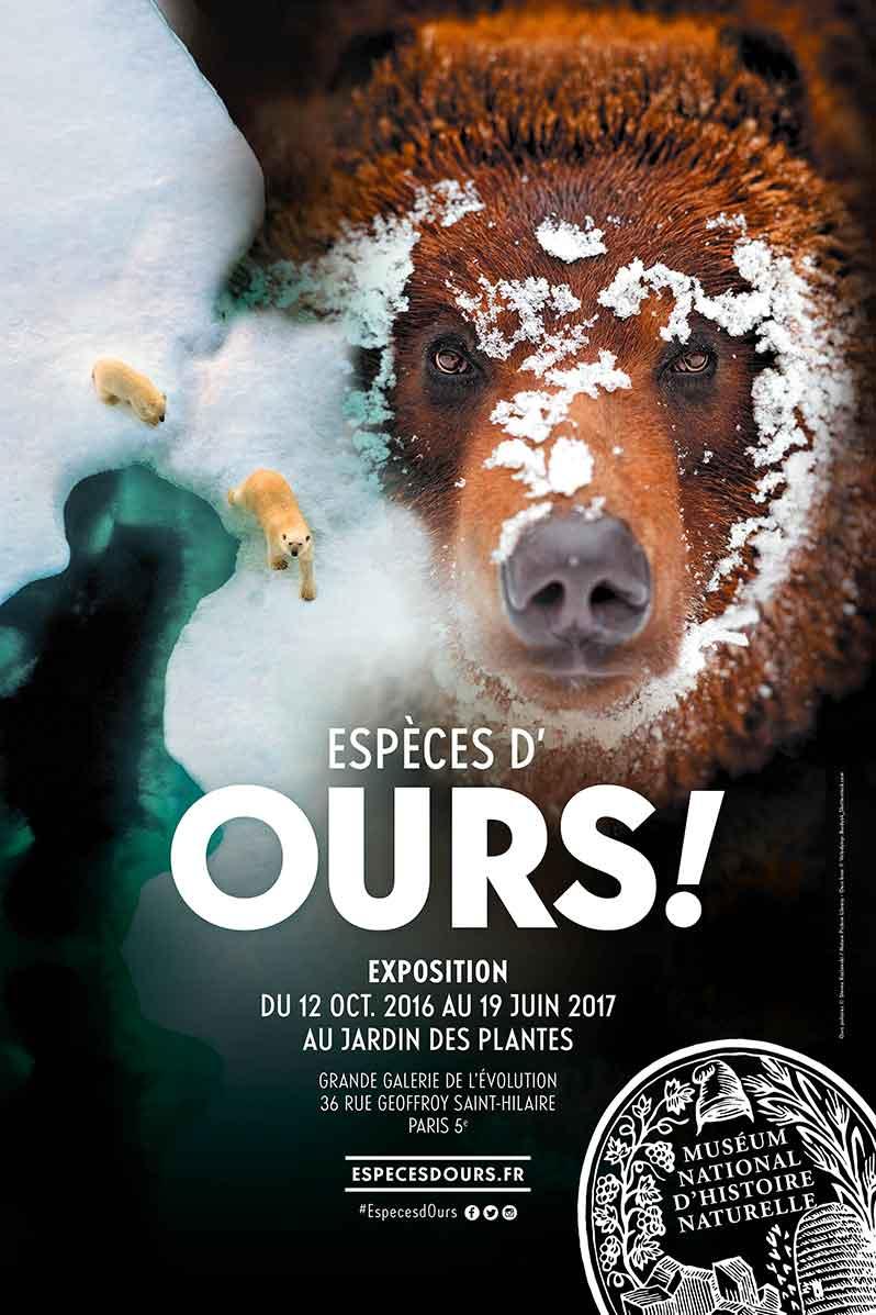 Exhibition: Espèces d'ours