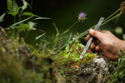 Exposition : La biodiversité, ça se cultive !