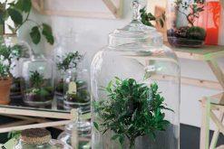 Atelier Green Factory : créateur de plantes autonomes