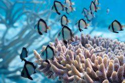 Exhibition: Récifs coralliens