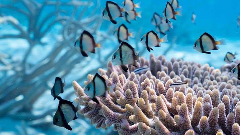 Exposition : Récifs coralliens