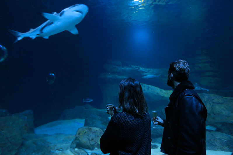 L'Aquarium de Paris fête la Saint-Valentin !
