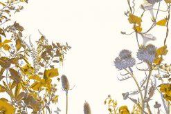 Exposition : Jardins intérieurs