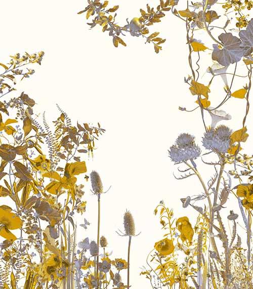 Exhibition: Jardins intérieurs