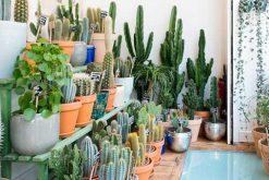 Le Cactus Club : le concept-store végétal à croquer de Paris