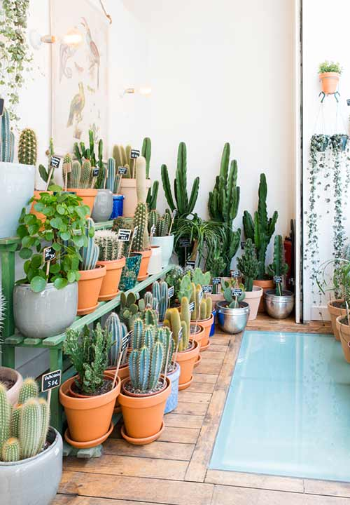 Cactus Club: Paris's exquisite plant concept-store