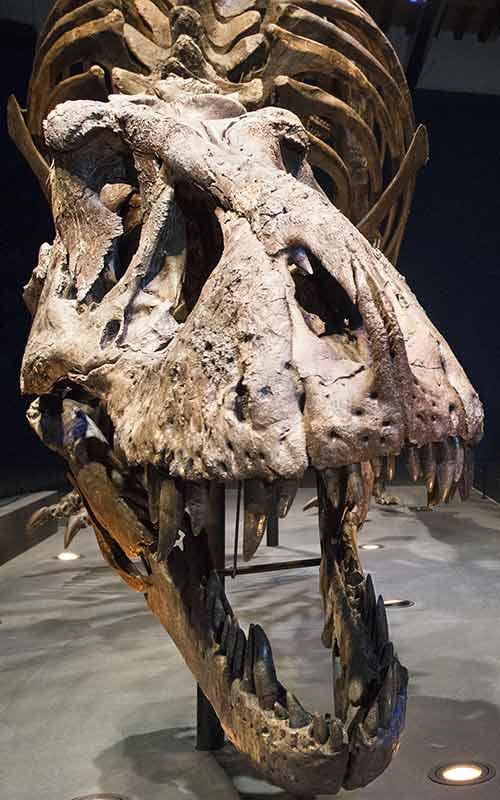 Exhibition: A T-Rex in Paris