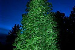 Exposition : Portraits d'arbres remarquables illuminés