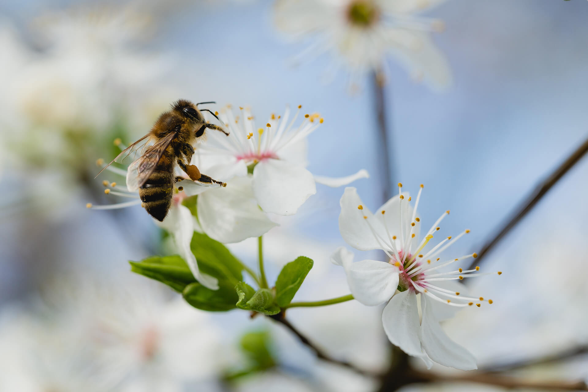 3 conseils pour préserver la biodiversité