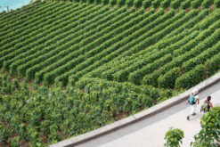 Rendre l'agriculture moins polluante ?