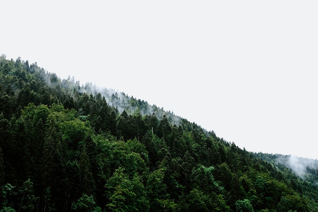 (Français) Pour réduire le réchauffement climatique, il faudrait planter 1 000 milliards d'arbres