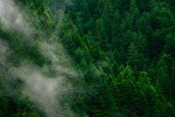 (Français) Les aires protégées, un moyen efficace de lutte contre la déforestation tropicale ?