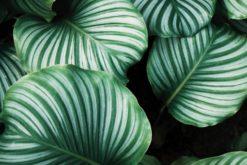 Des recherches montre l'intelligence et la sensibilité des plantes