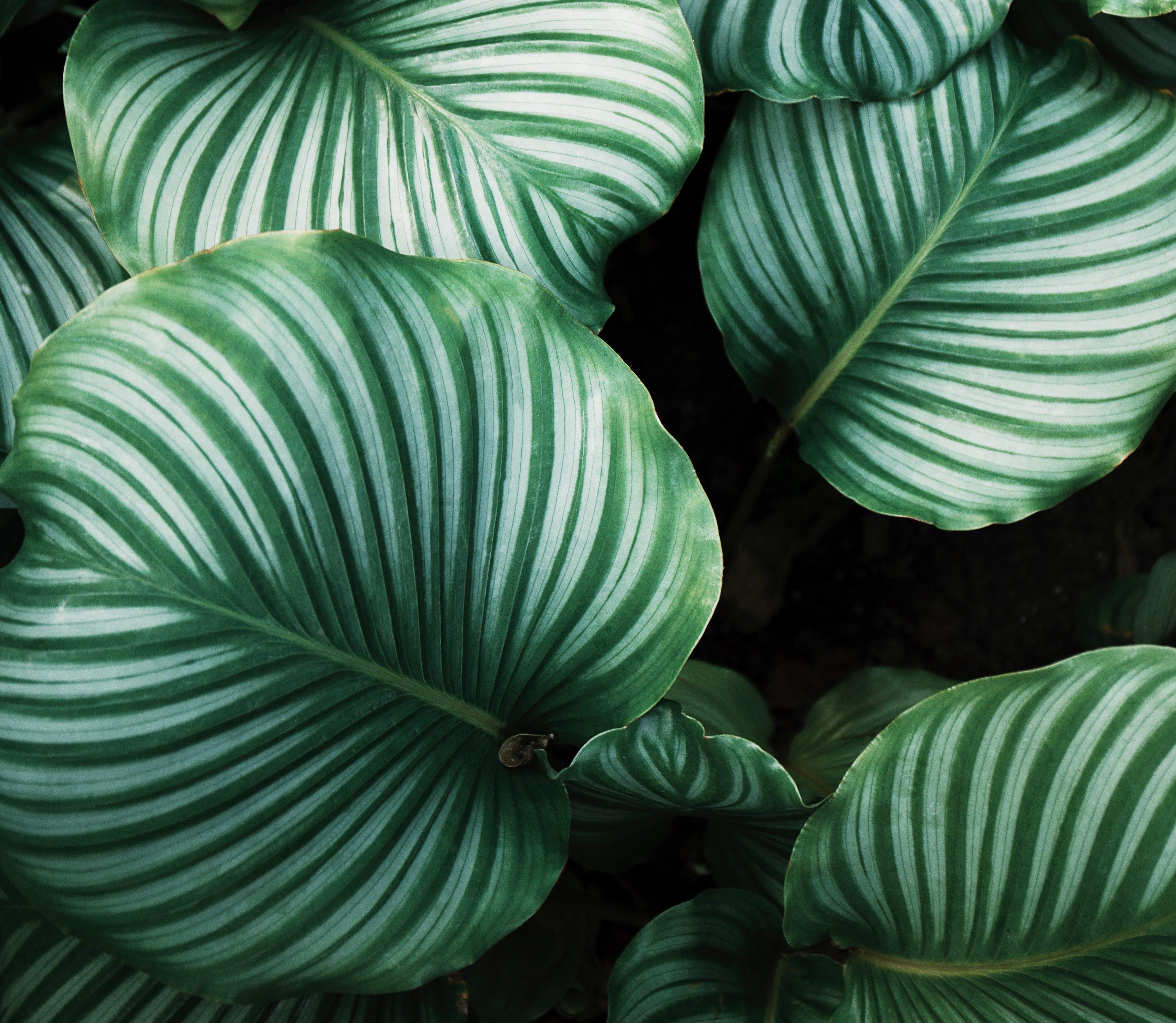 (Français) Des recherches montre l'intelligence et la sensibilité des plantes