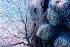 (Français) Récifs coralliens : 3 stratégies pour les sauver