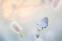 Le déclin des insectes plus important que prévu?