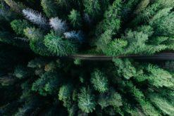 Déclarer la forêt amazonienne bien commun de l'humanité