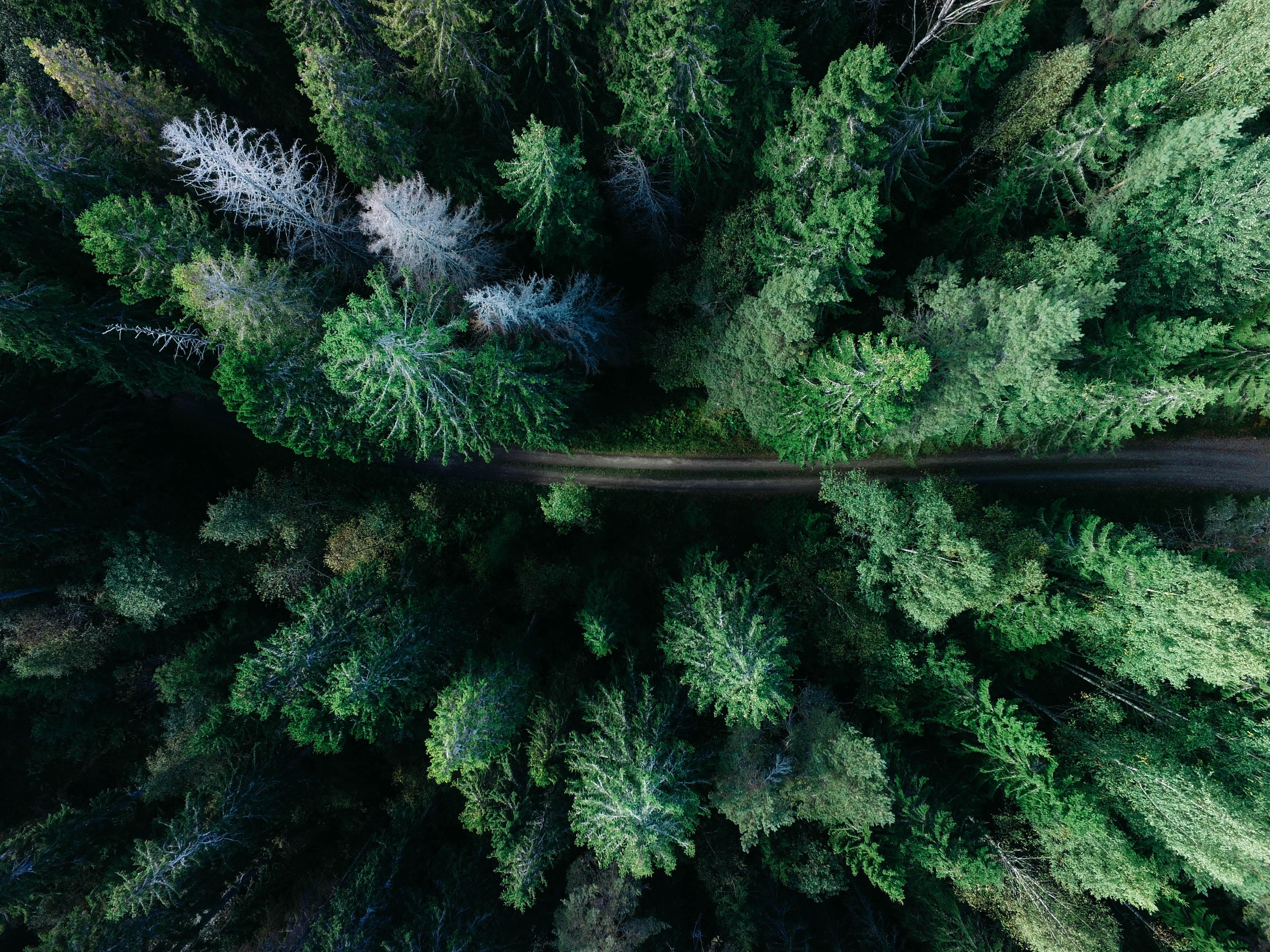(Français) Déclarer la forêt amazonienne bien commun de l'humanité