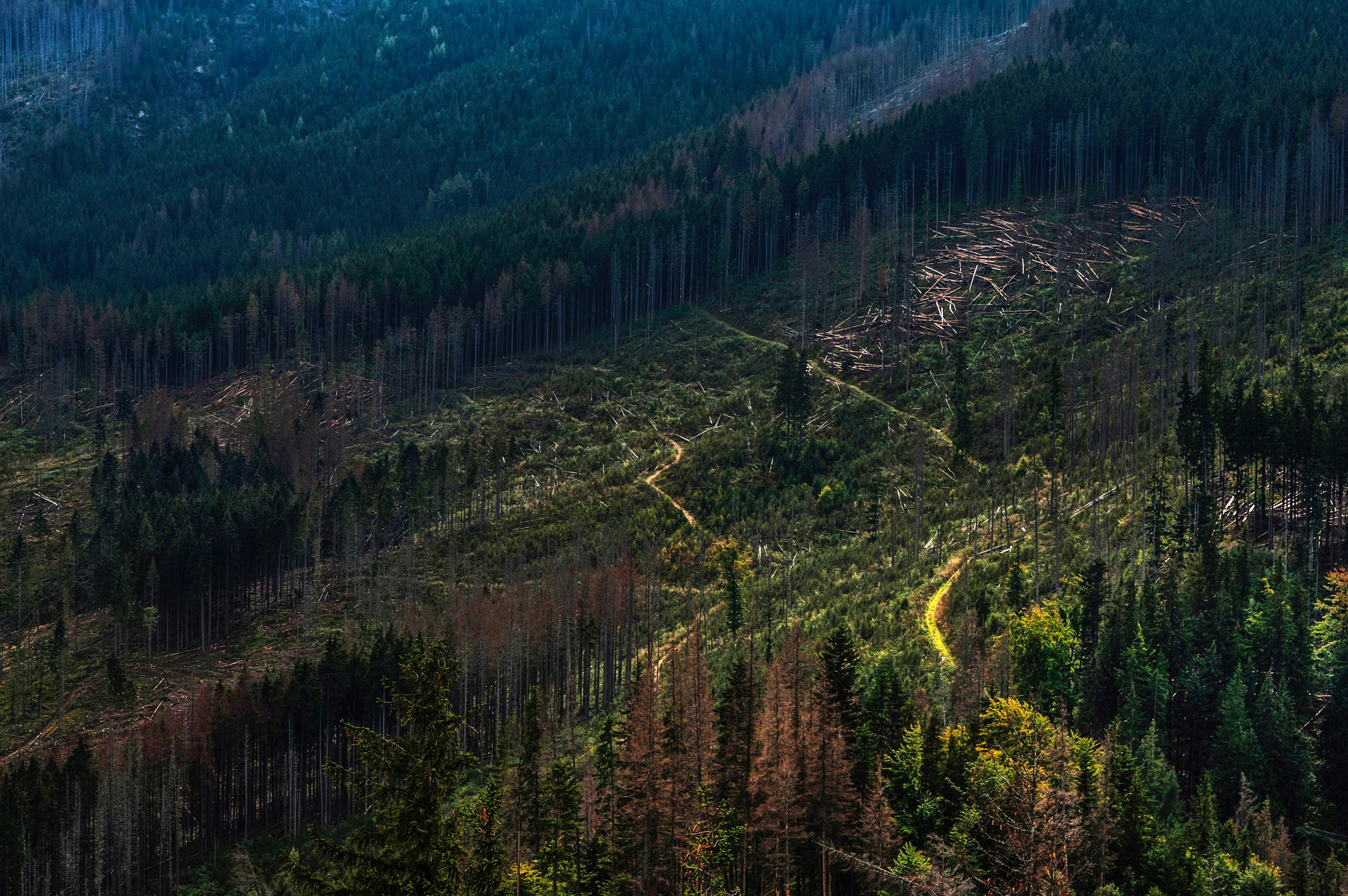 Déforestation : un point de non-retour identifié