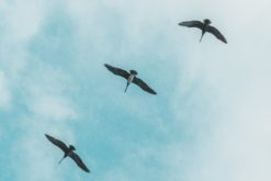 (Français) Biodiversité : trois milliards d'oiseaux ont disparu depuis 1970 en Amérique du Nord