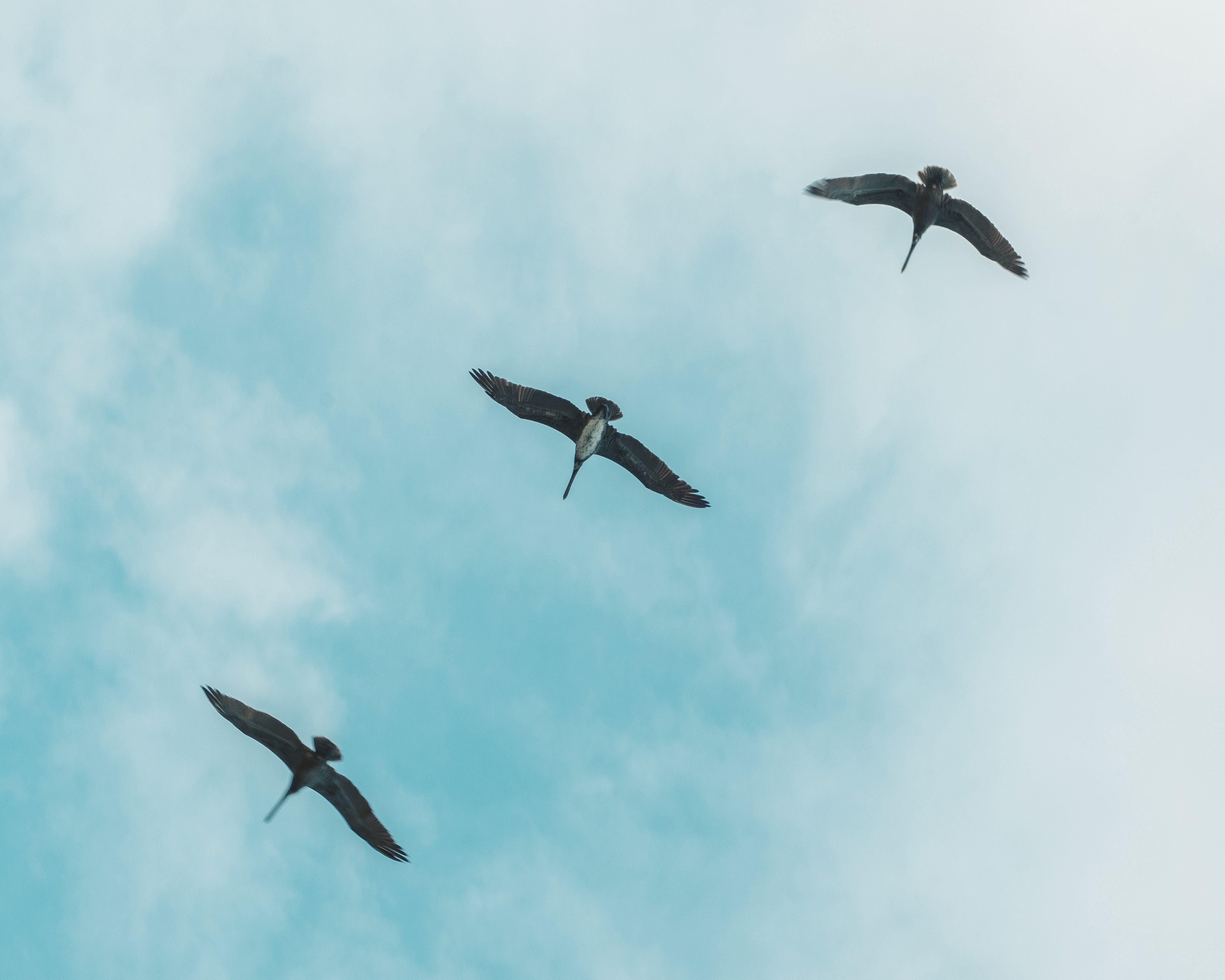 Biodiversité : trois milliards d'oiseaux ont disparu depuis 1970 en Amérique du Nord