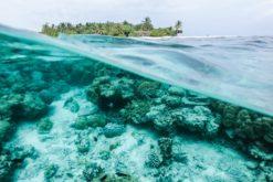 Le blanchiment de masse frappe la Grande Barrière de corail