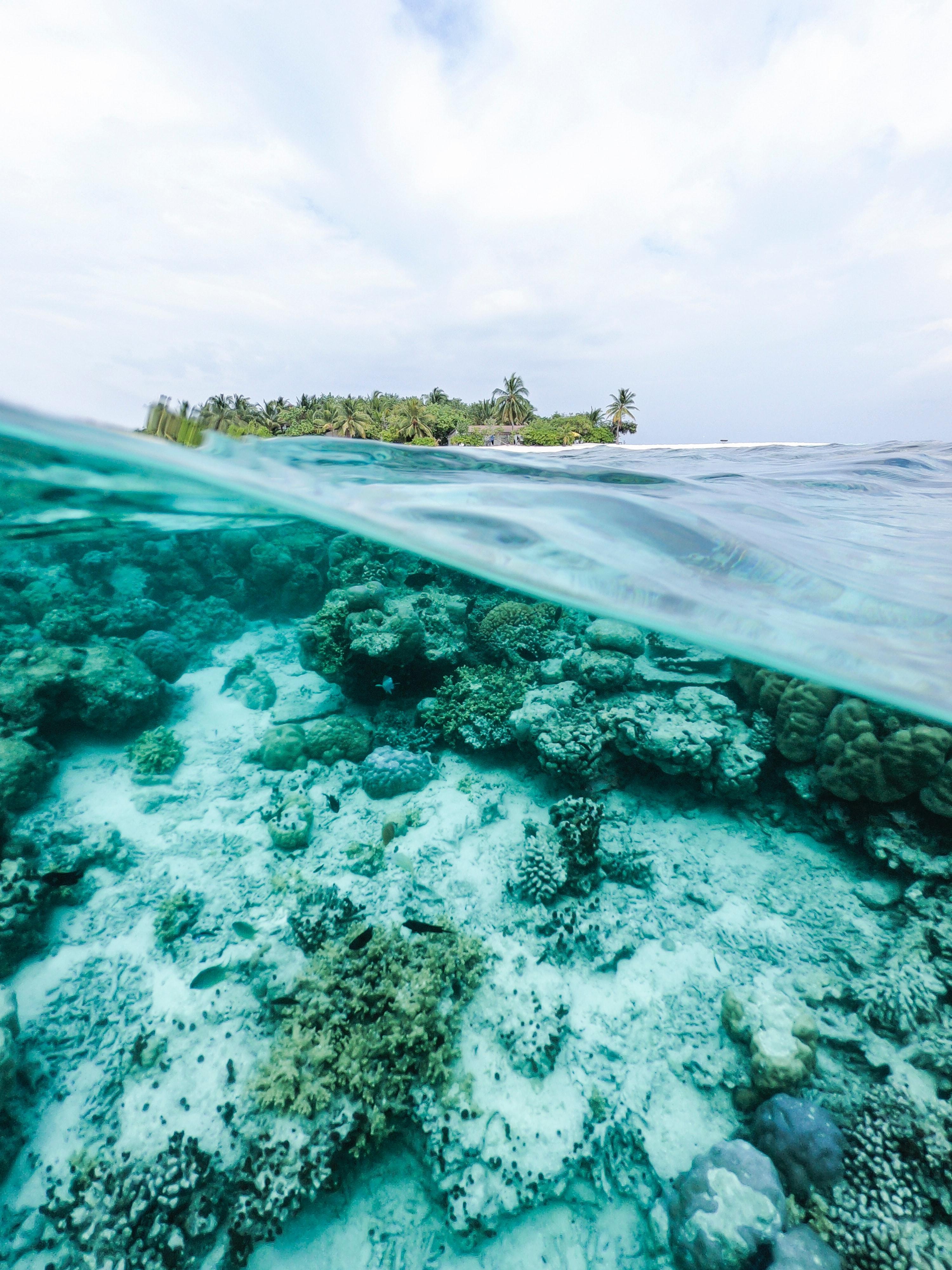 (Français) Le blanchiment de masse frappe la Grande Barrière de corail