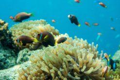 Une stratégie pour restaurer la vie marine d'ici 2050