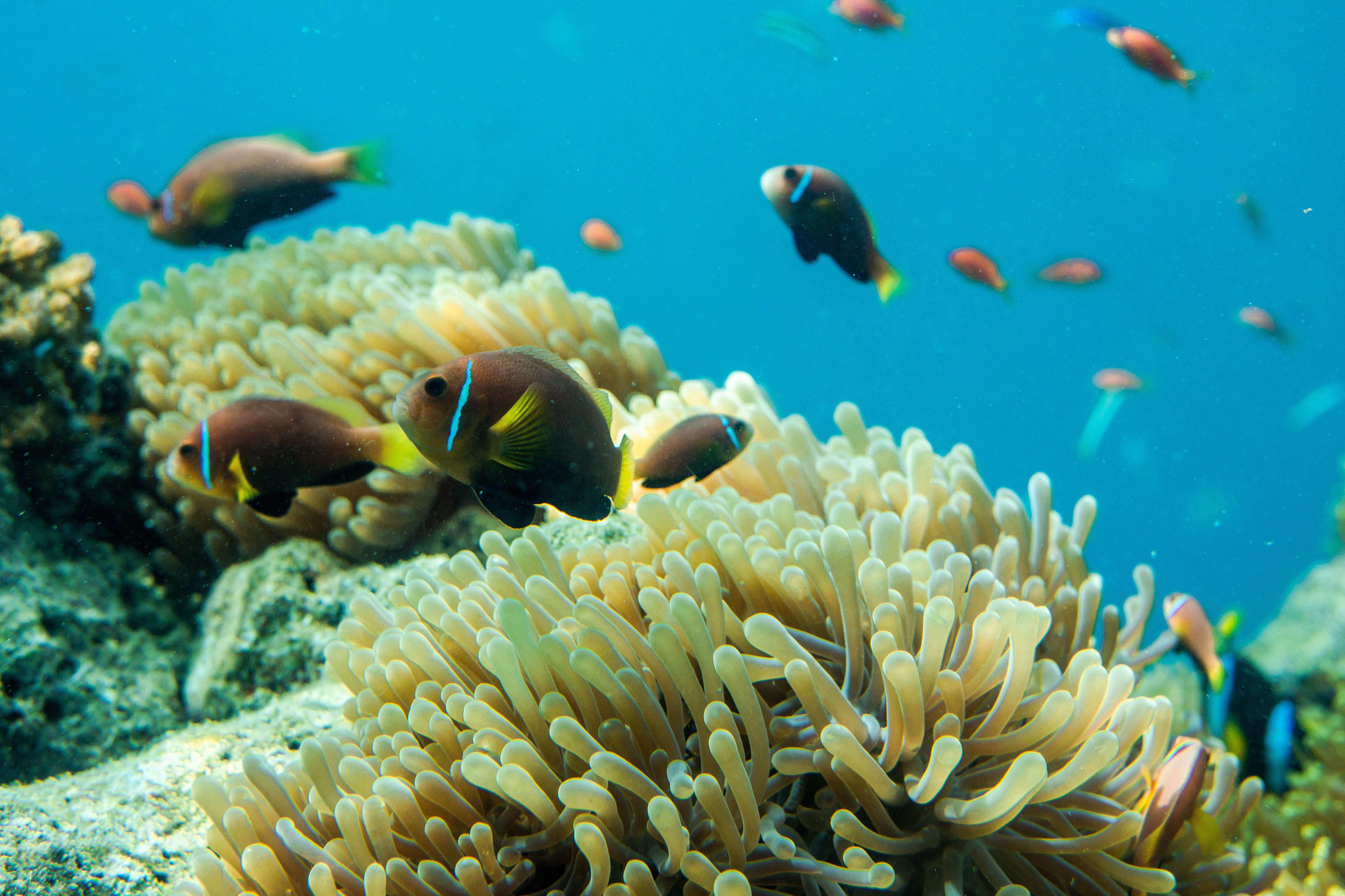 (Français) Une stratégie pour restaurer la vie marine d'ici 2050