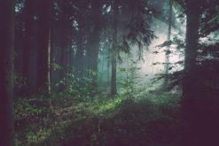 Détruire les habitats naturels des animaux conduira à de plus en plus de pandémies