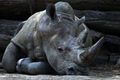 (Français) L'extinction massive actuelle est en pleine accélération