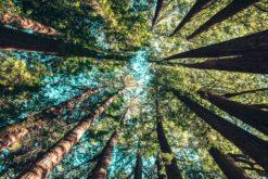 Réchauffement climatique : les forêts tropicales relâcheront du CO2 si les températures dépassent 32 °C