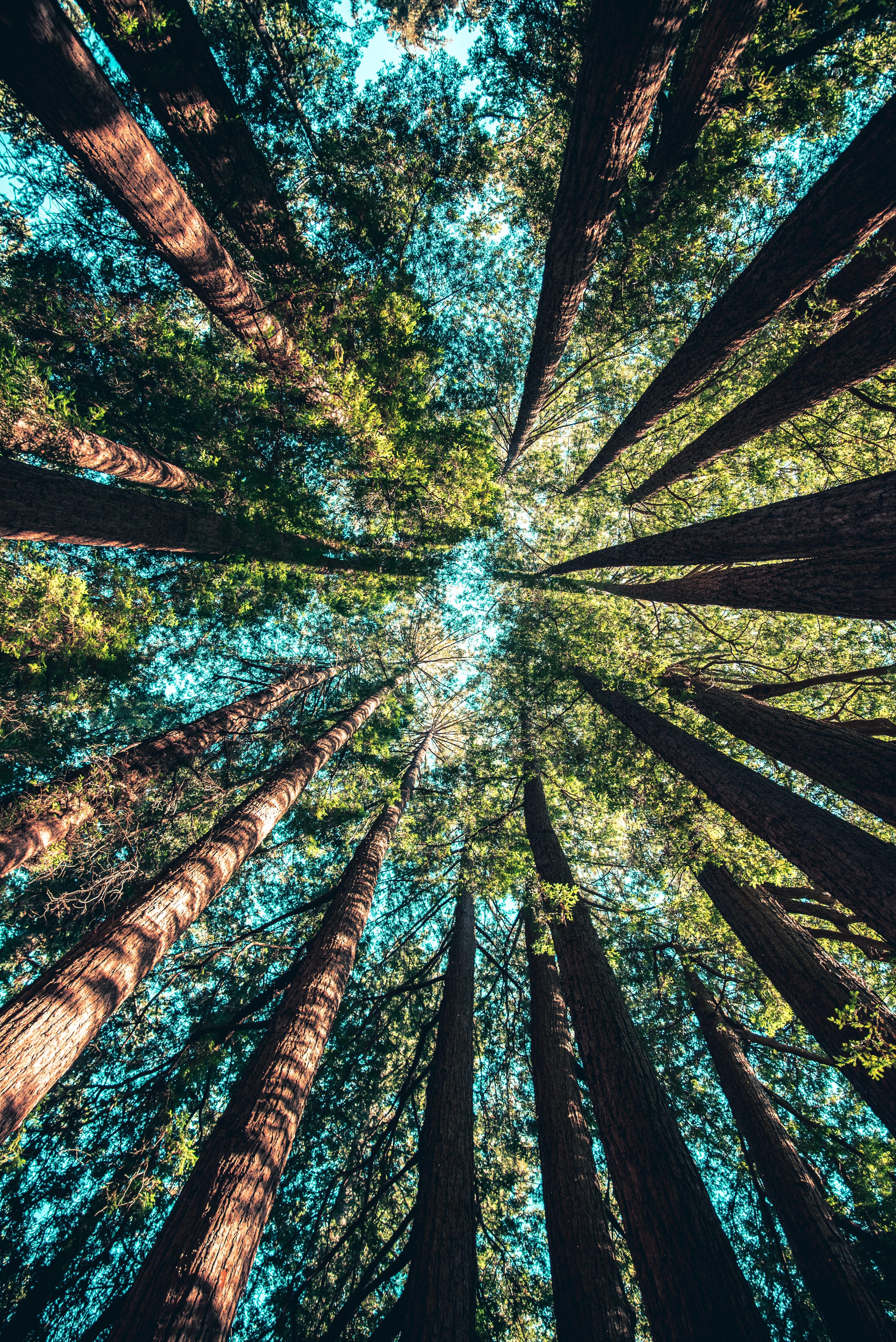 (Français) Réchauffement climatique : les forêts tropicales relâcheront du CO2 si les températures dépassent 32 °C
