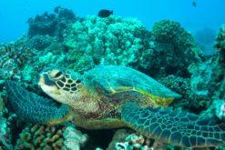 Les fonds marins ne sont pas épargnés par la montée des températures